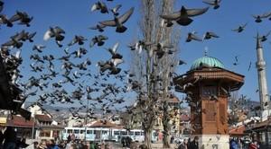 sebil golubovi sarajevo