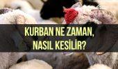 Kurban nasıl kesilir? Kurban ne zaman kesilir? Kurban eti nasıl dağıtılır?